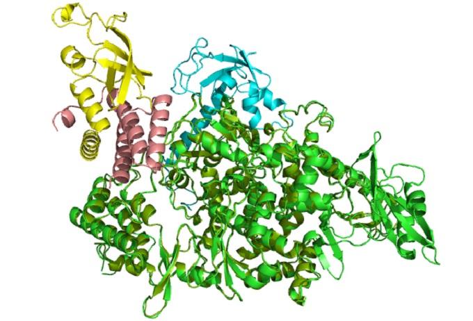 a vírusellenes gyógyszerek hatása az emberi testre