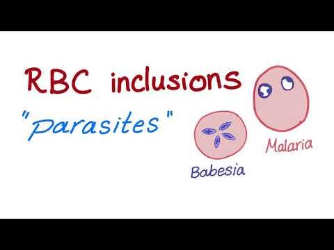 paraziták a halkezelésből