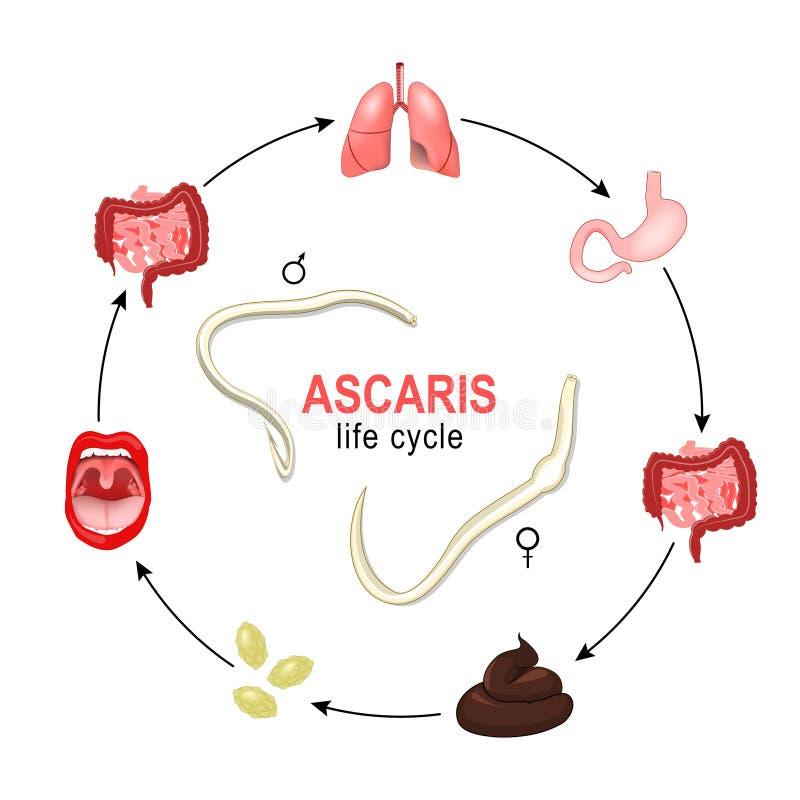 foros ascariasis)