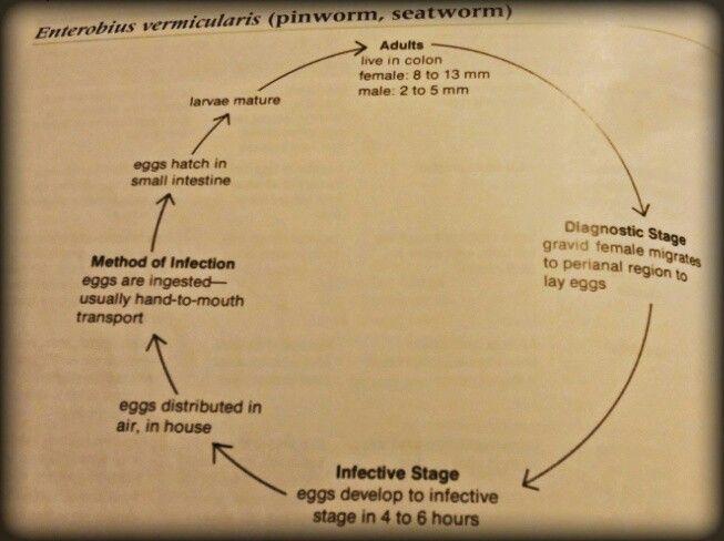 antigen giardia simptome