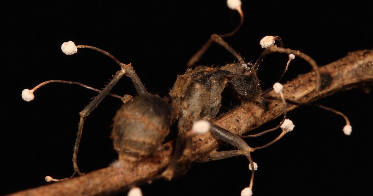 nézni parazita minden évszakban
