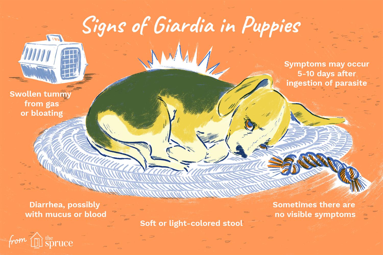 Giardia stomach parasite.