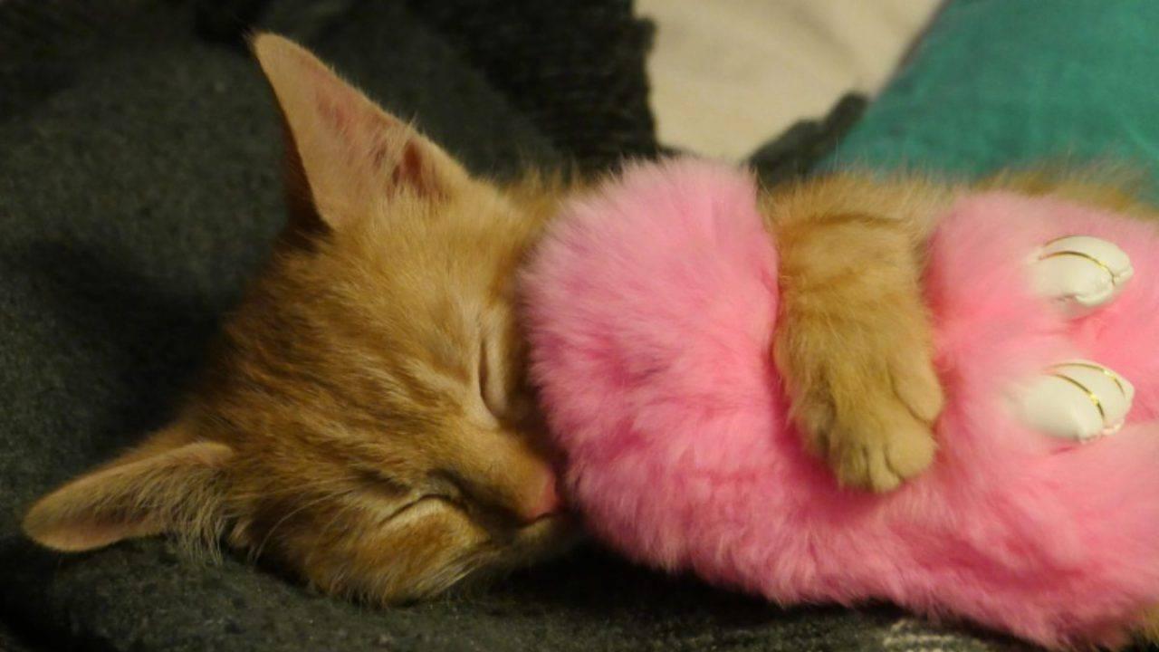 Giardia gatto contagio