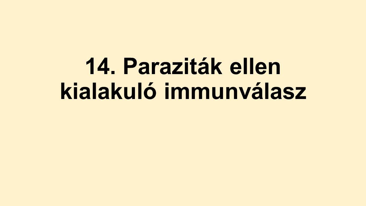 protozoan paraziták ppt