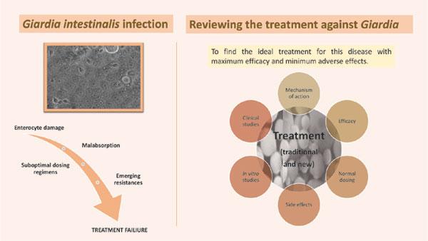 Giardiasis kutatása - Helmintikus terápia kutatása