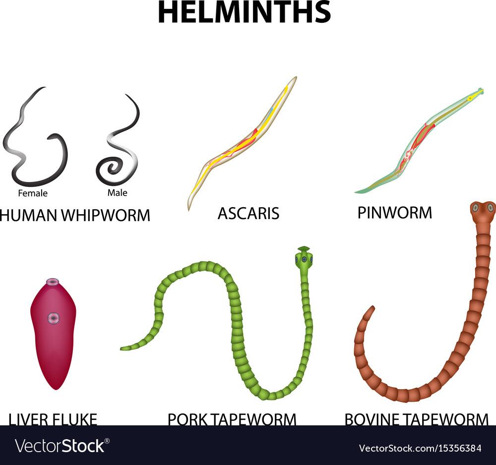 helminthiasis enterobiasis ascariasis)