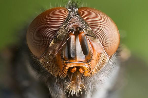 Kisállatorvos - A szúnyogok világnapja