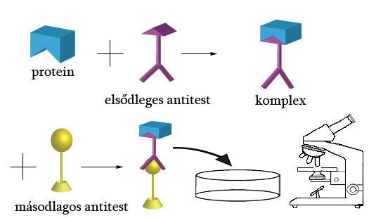 Antitestek négy helmintához, Higiénia és higiénia - helminták