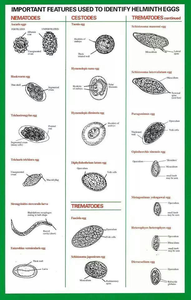 Helminthiasis és protozoák laboratóriumi diagnosztizálása