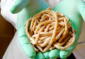 pinworms gyermekeknél