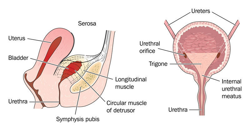 Heveny hólyaggyulladás tünetei és kezelése
