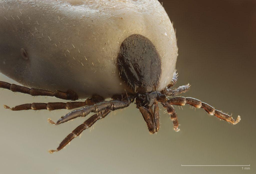 parazita viszketés bőrkezelés