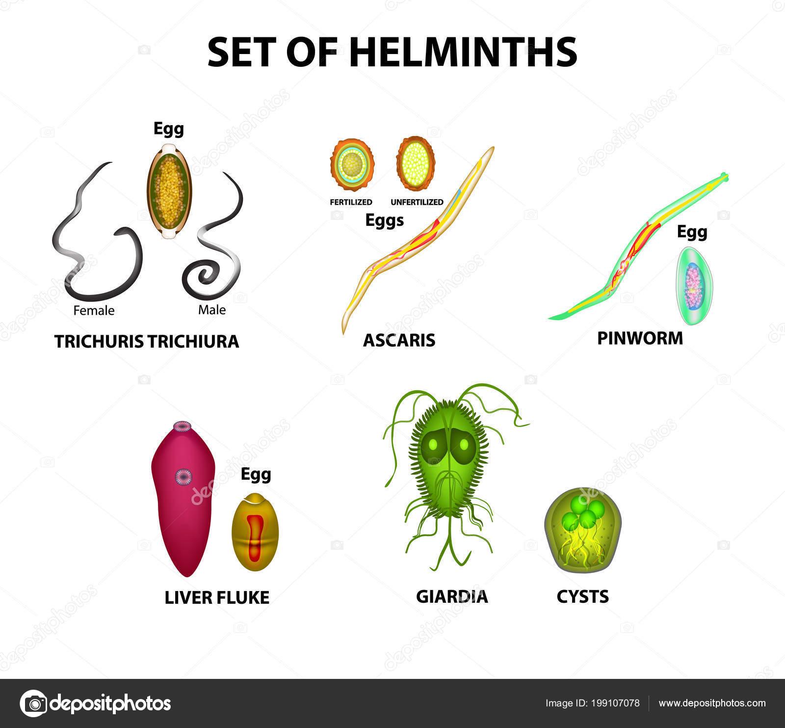 a pinworms az egész testben