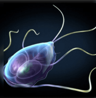 paraziták opisthorchiasis kezelése)