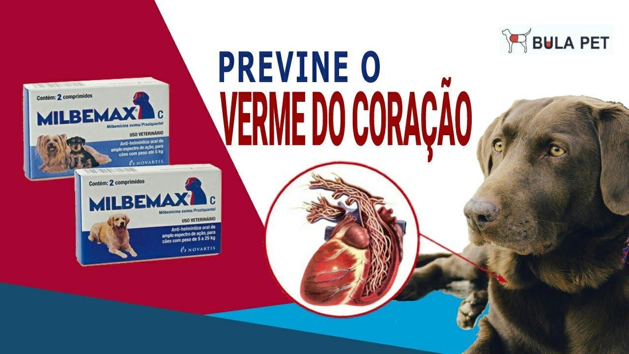 szívférgesség védekezés szívféreg megelőzés