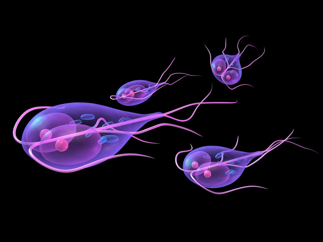 can giardia cause weight gain
