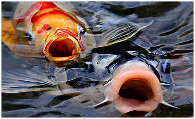 halak kezelése férgekből a tóban