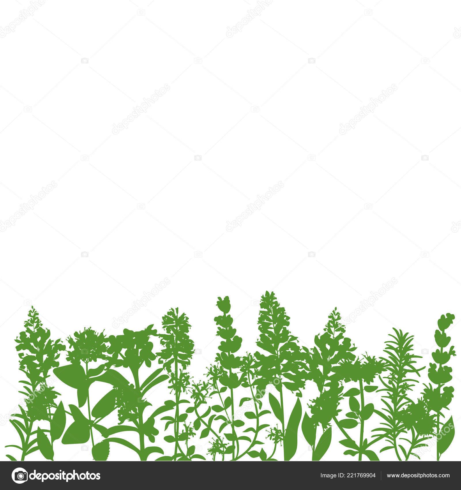 neem fű parazitákból)