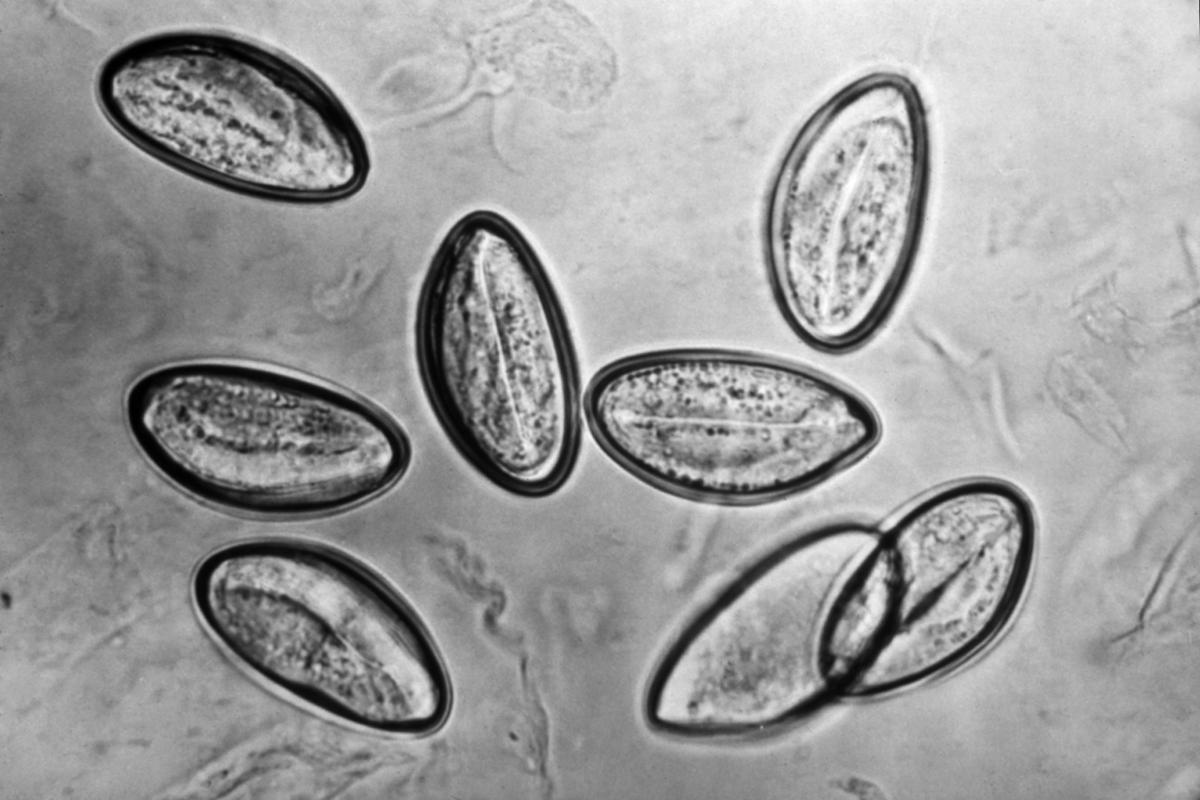 Enterobiosis Tulában
