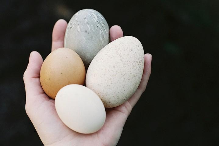 milyen gyakran tojások tojások bactefort kapszula