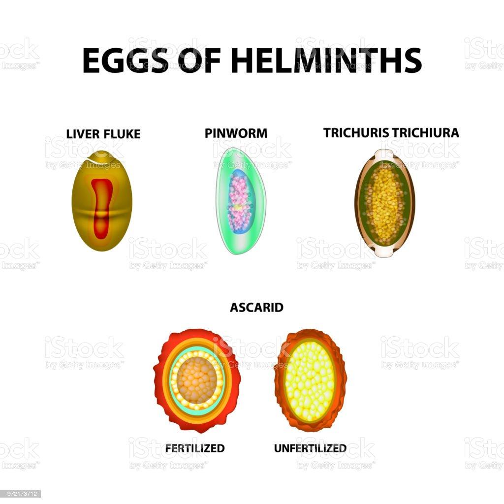 a helminthiasis rendje