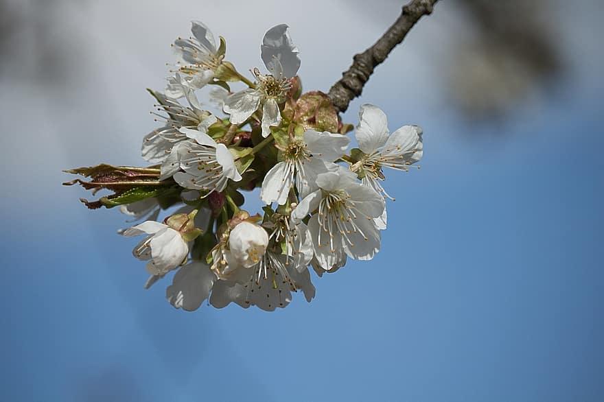 rossz lehelet a fehér virágzás miatt