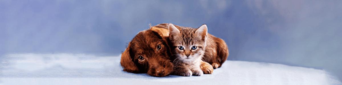 giardia pisica