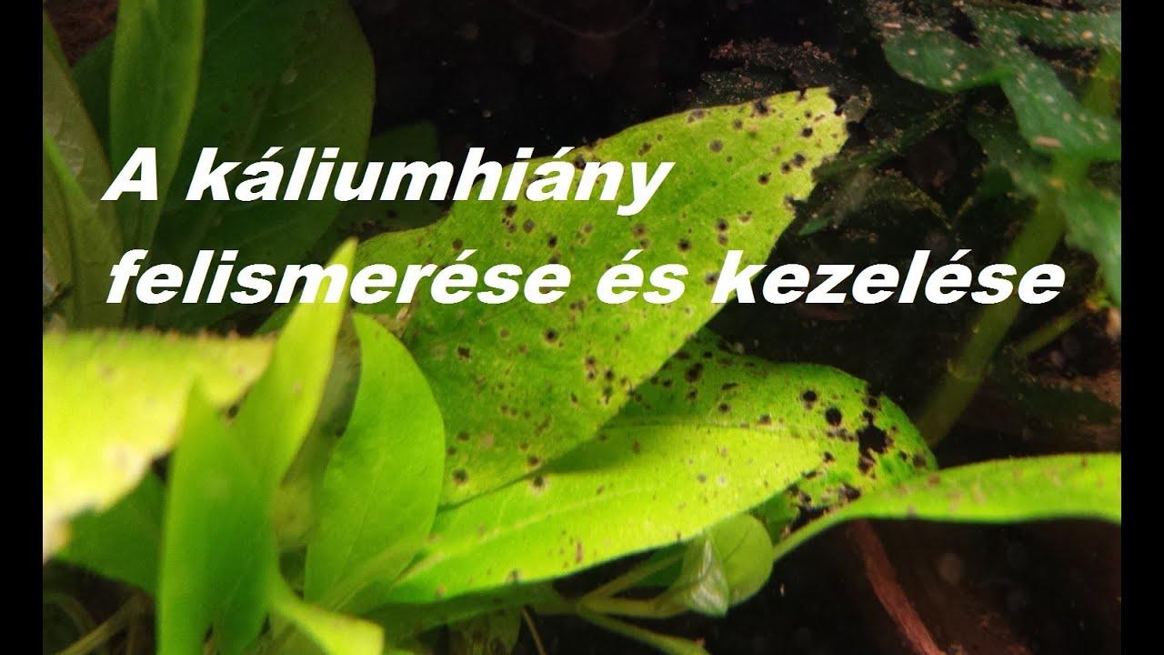 a paraziták fűéből