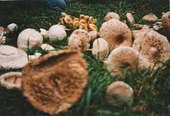 Élősködő gombák by Dániel Hallgató on Prezi Next