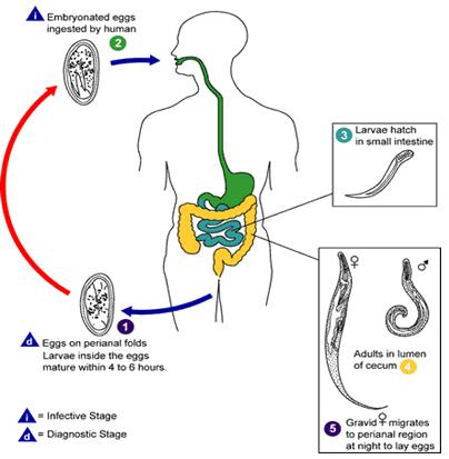 Remedio giardia y ameba