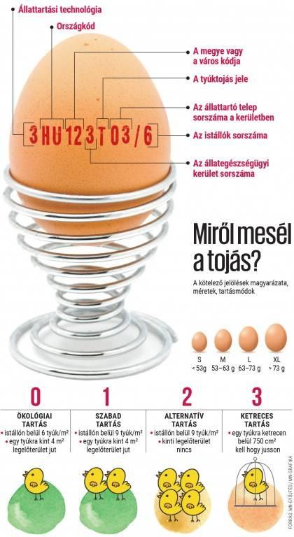 trichocephalosis tojásméret
