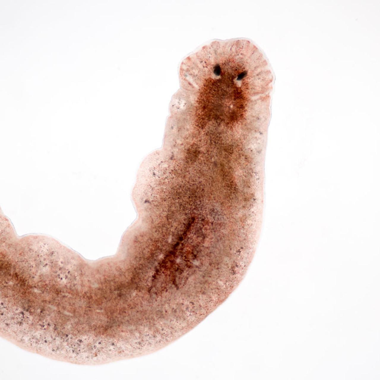 mérgező a parazitáktól paraziták az emberi testben népi gyógyszerekkel