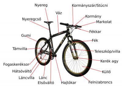 aszcariasis átviteli mechanizmus)