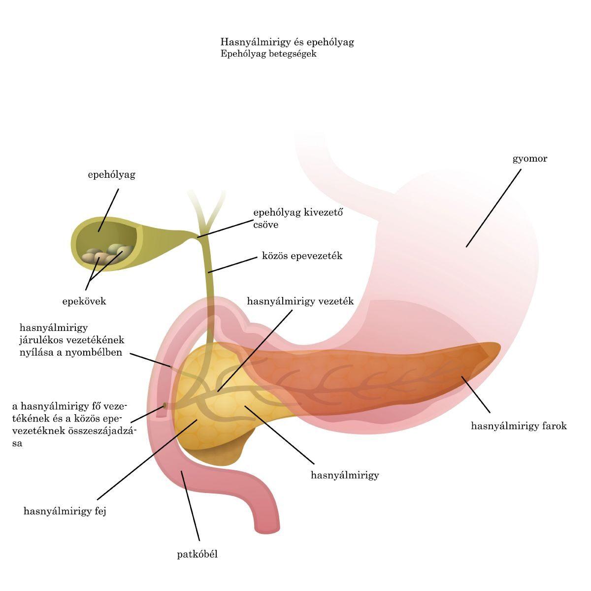 Helminthiasis és kezelés. Teljes helminthiasis kezelés - Ascaris kezelési rend