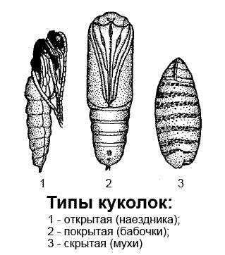hipodermikus helminták)