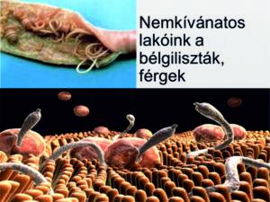 bél paraziták kép)