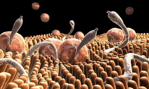 bélfergesseg lelki okai helminth tojás a széklet kezelésében