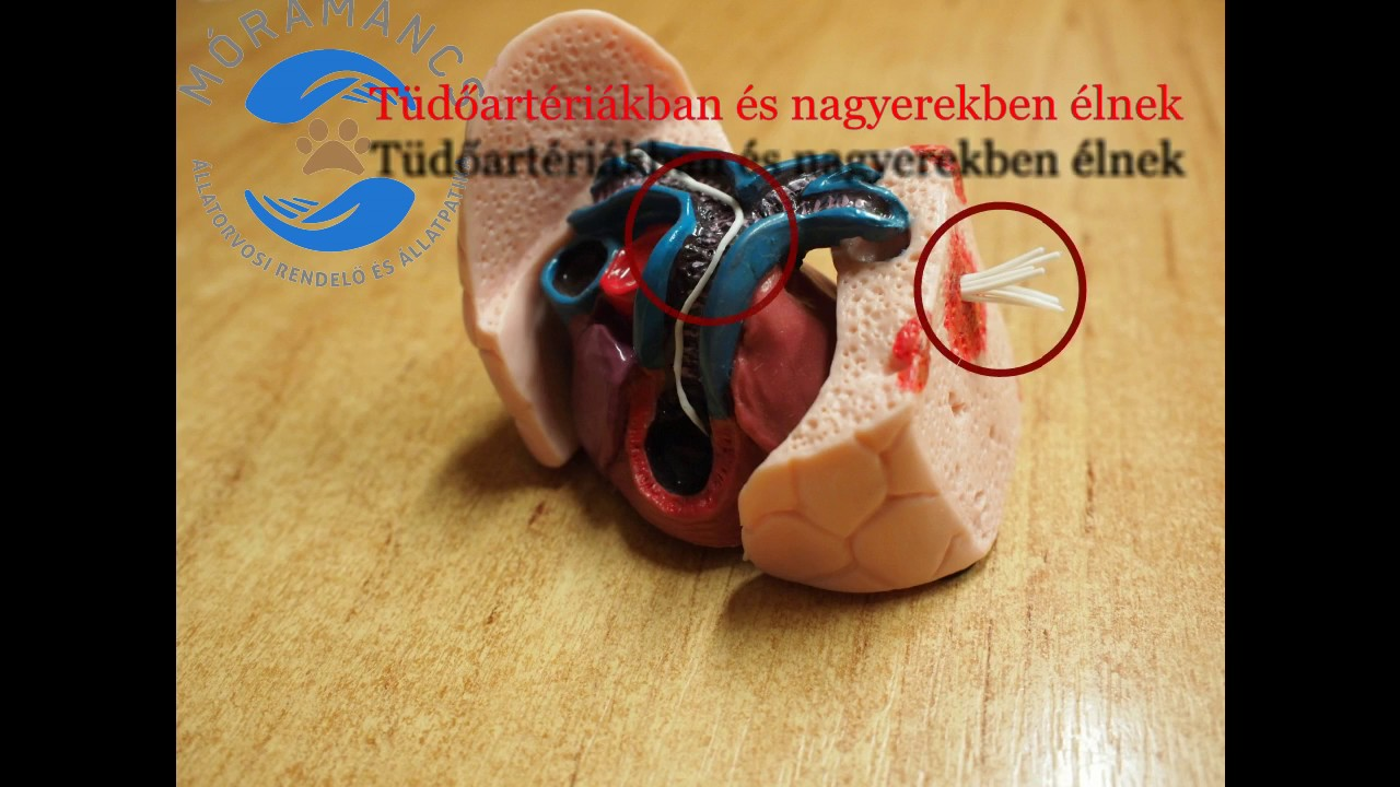 giardia hond behandeling