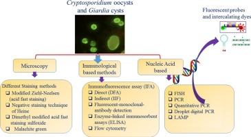 giardia and cryptosporidium antigen
