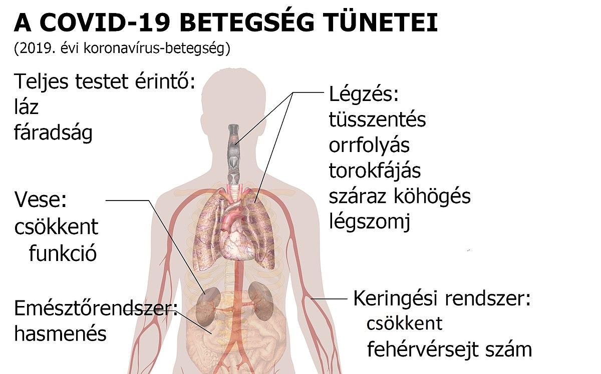horgosférgek a fő klinikai tünetek)