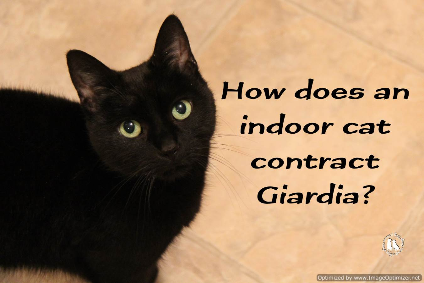 giardia in cats)