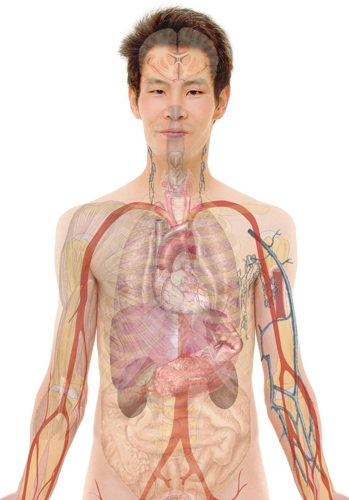 az emberi testben található paraziták