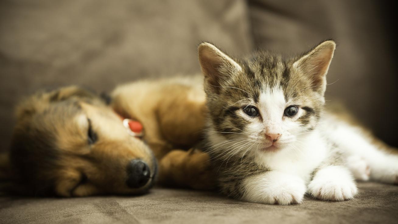 miért veszélyesek a macskaférgek a gyermekre)