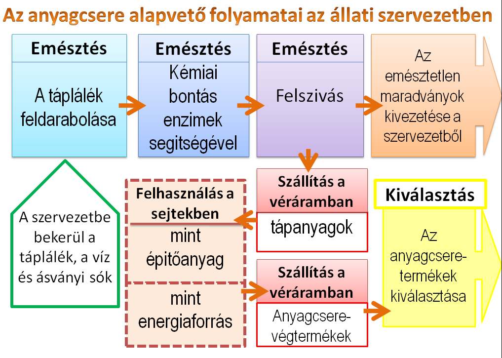 heterotróf paraziták)