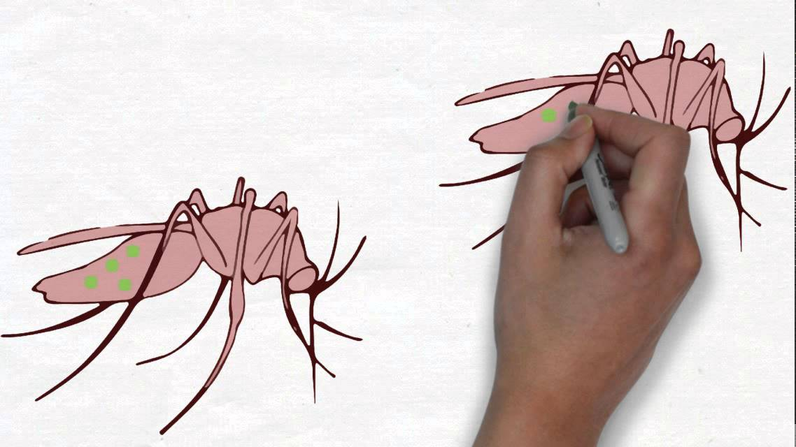 metabolikus méregtelenítés gomba parazita zombi rovarok