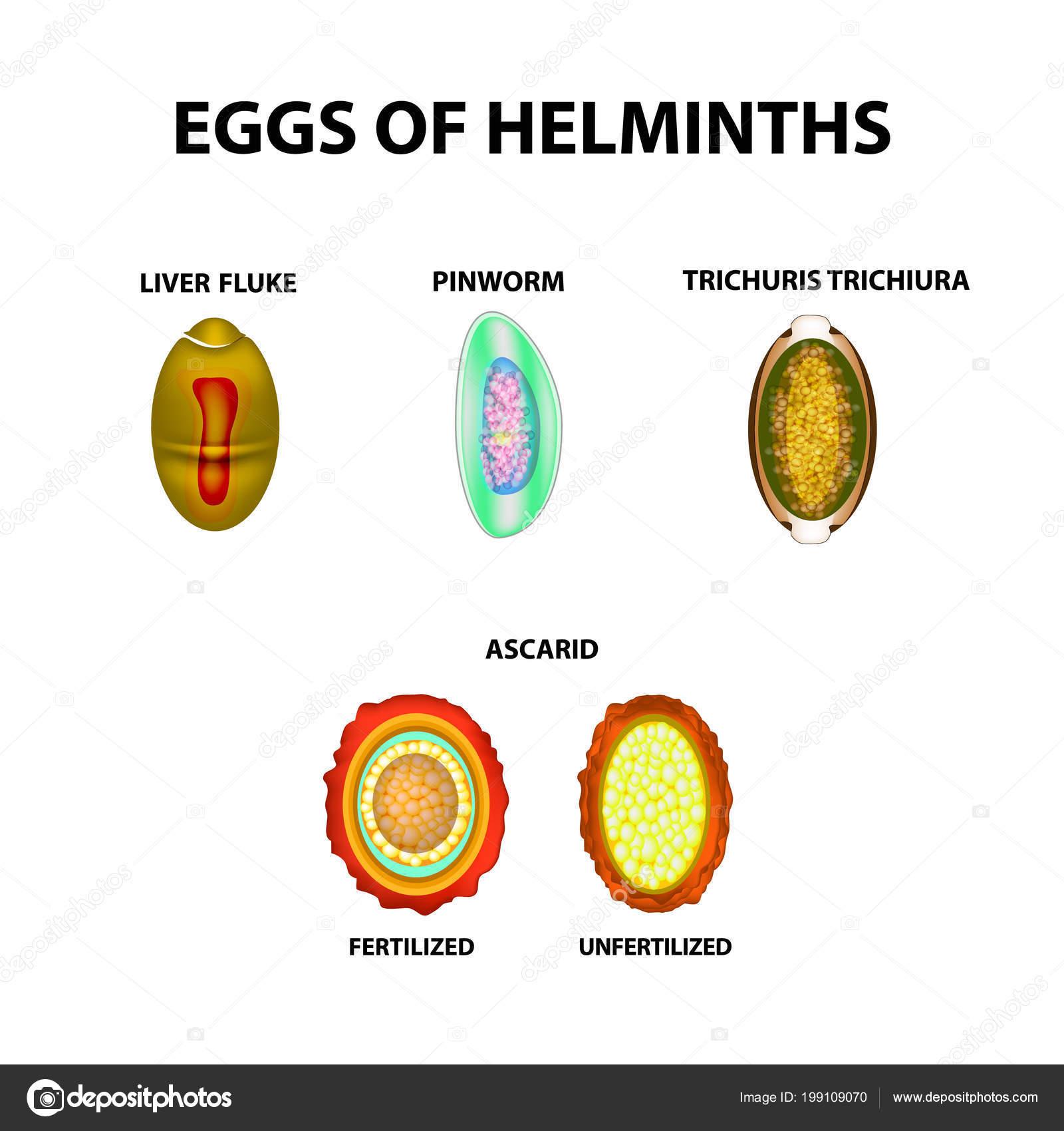 Kémcsőbe a bélszín tojások székletére