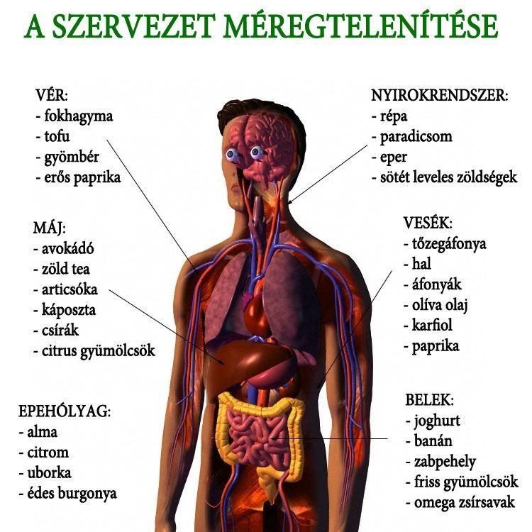 emberi méregtelenítő szervek)