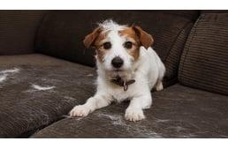 Állategészségház - Vértesszőlős