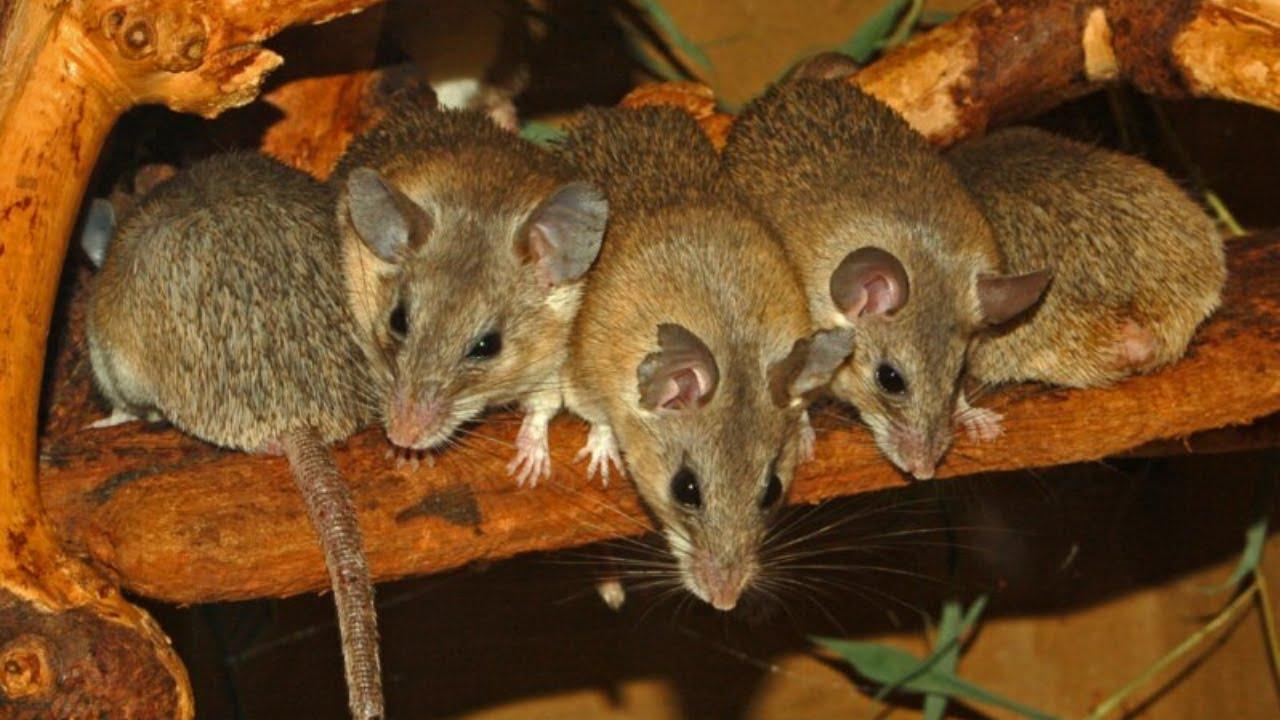 simptome giardia pisici lágyférgek tojás látható