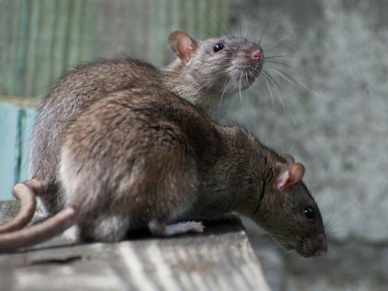 egerek szaga a szájból)